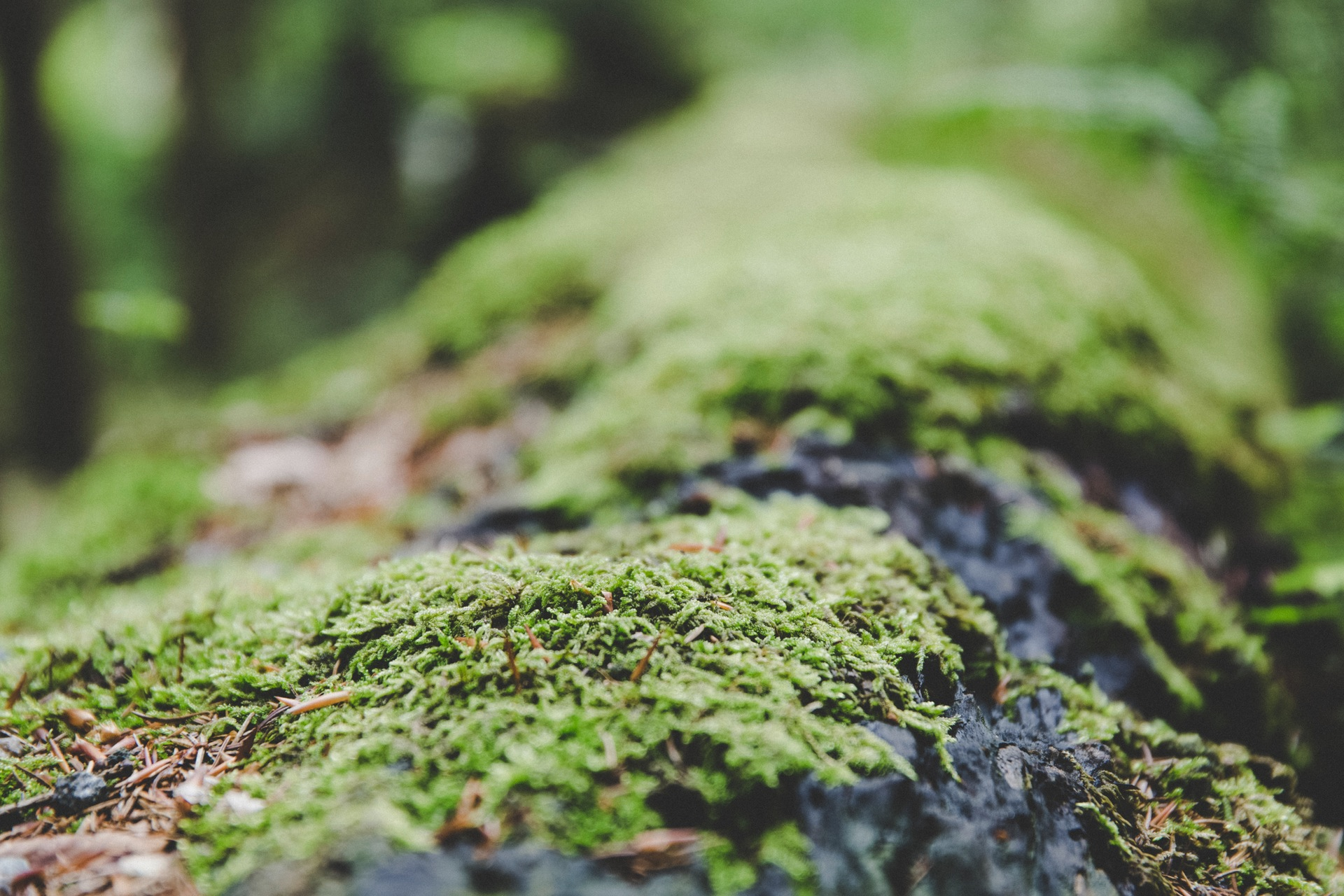 musgo, árbol, piedra, tronco, macro - Fondos de Pantalla HD - professor-falken.com