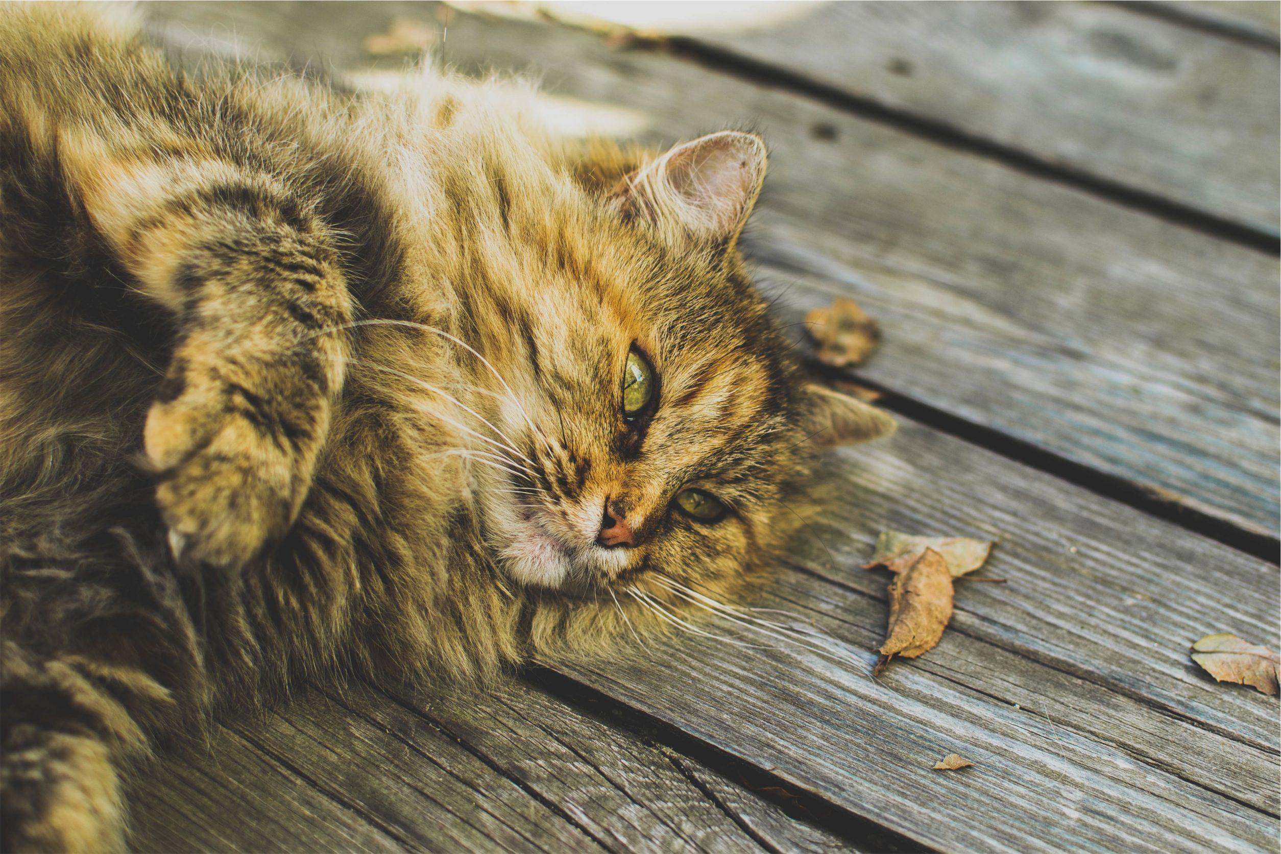 猫, 放松, 土壤, 木材, 看看 - 高清壁纸 - 教授-falken.com