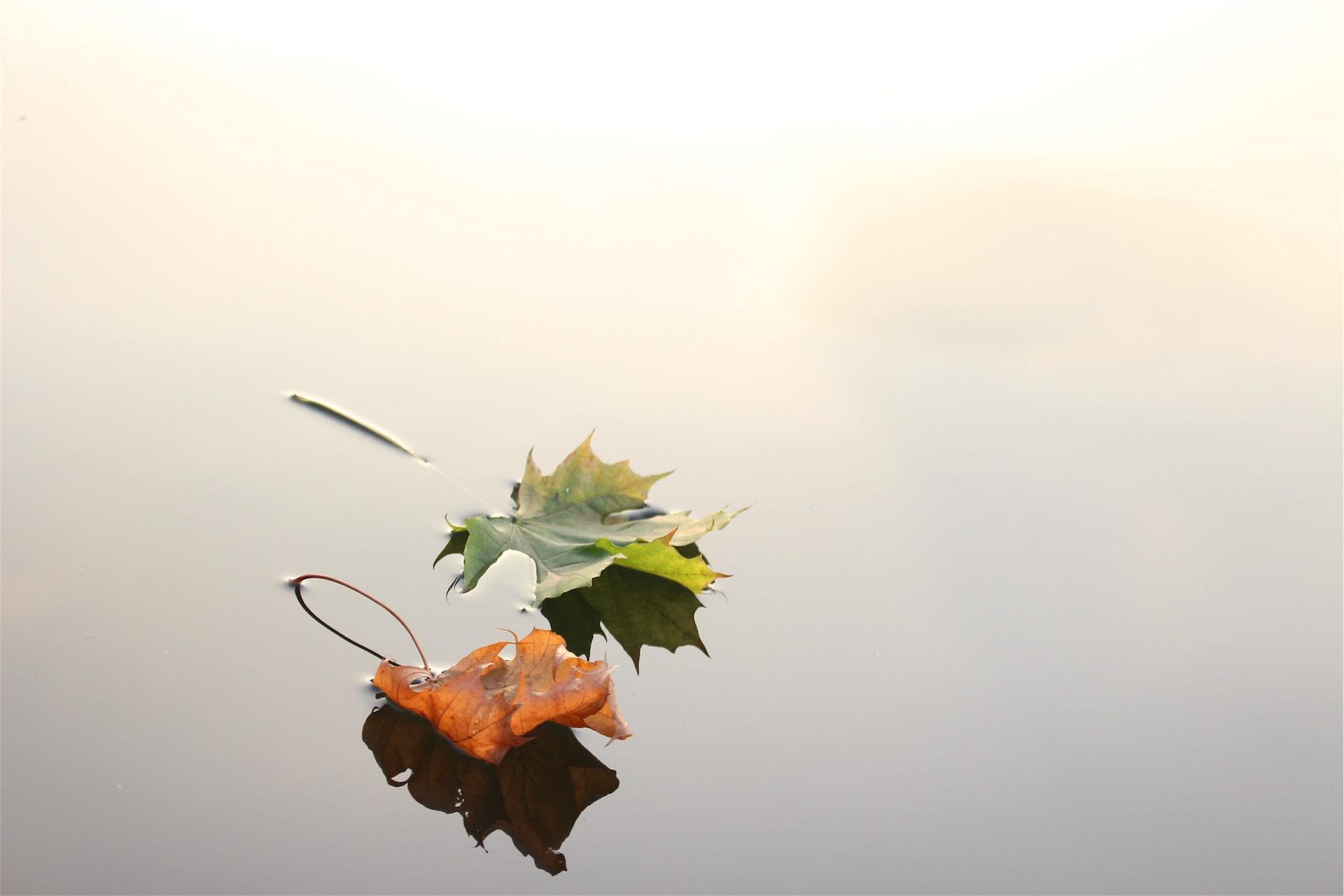 листья, пруд, Озеро, Грин, Браун - Обои HD - Профессор falken.com
