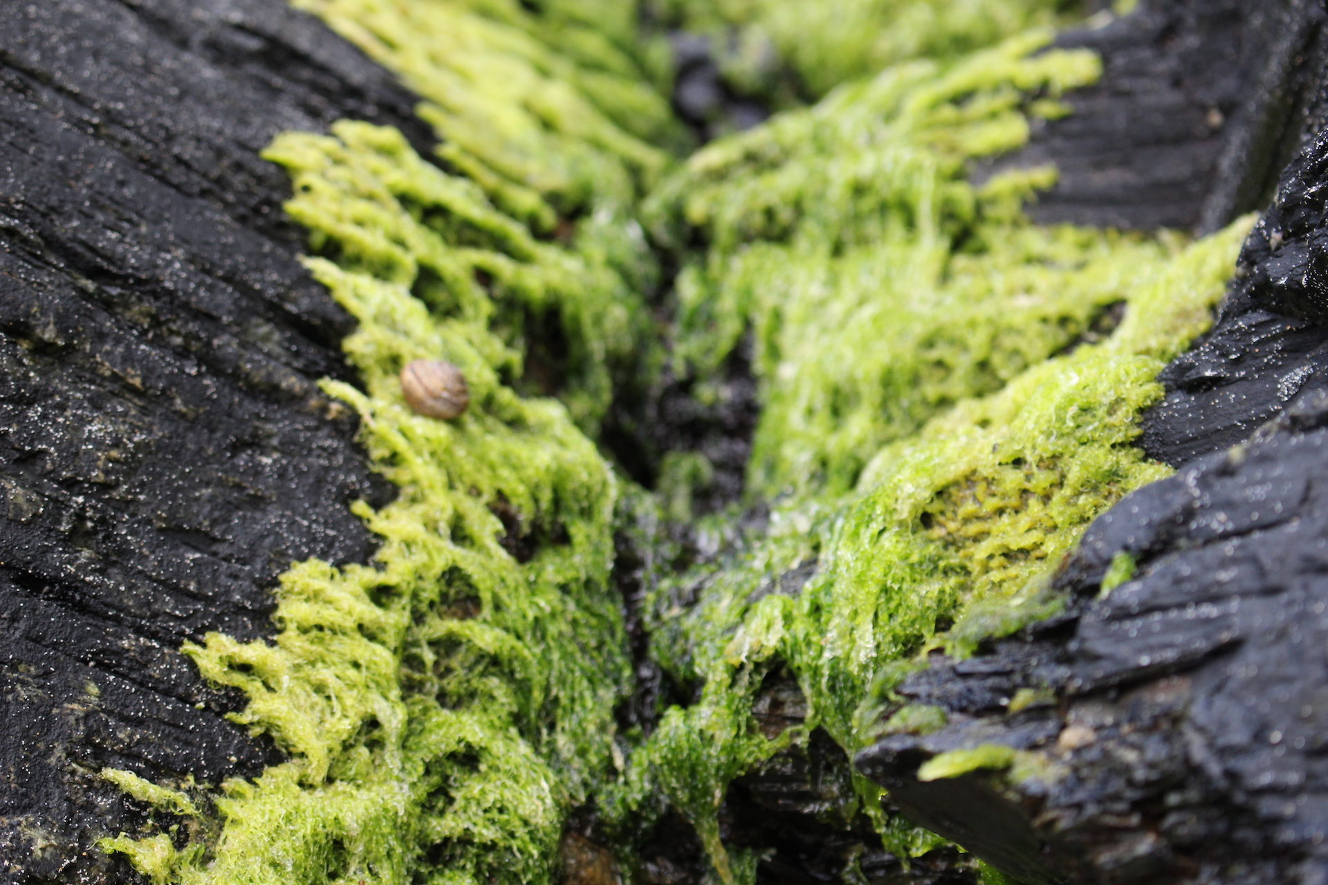 algas, pedras, caracol, Praia, Verde - Papéis de parede HD - Professor-falken.com