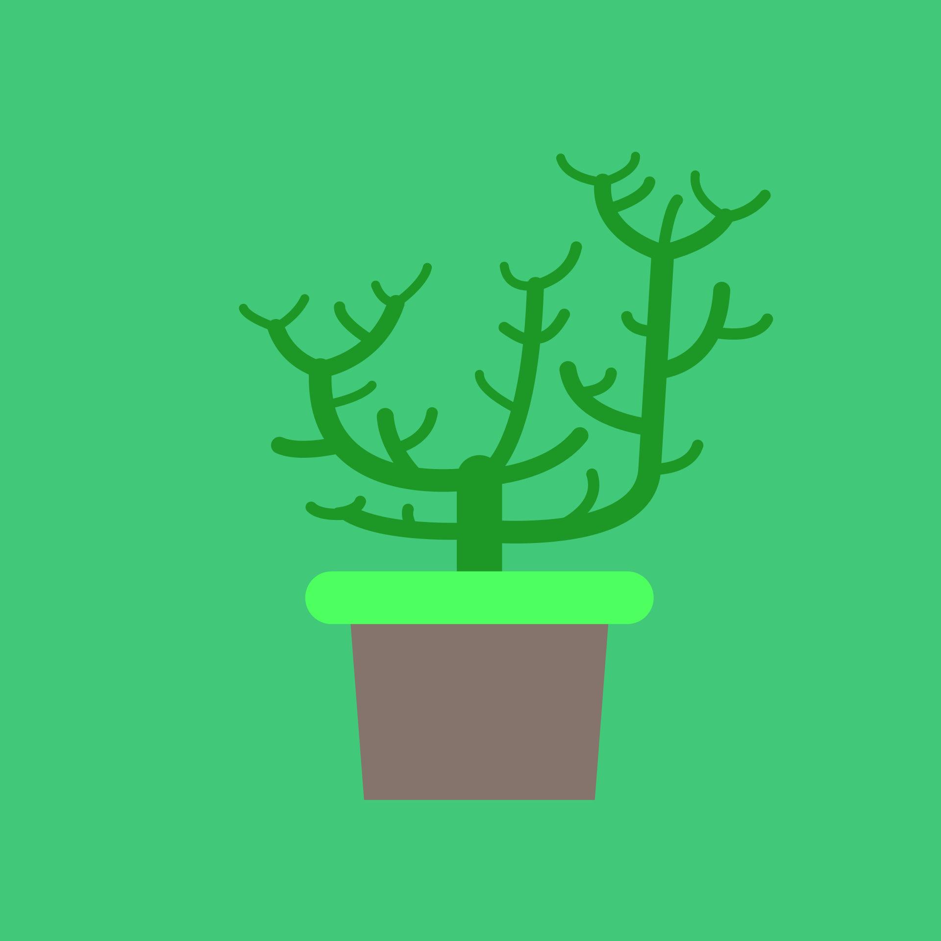 planta, maceta, cactus, verde, marrón - Fondos de Pantalla HD - professor-falken.com