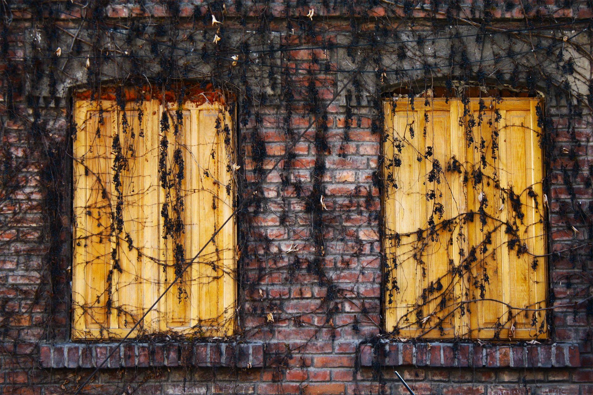Windows, Σπίτι, enrredaderas, φυτά, ξηρά - Wallpapers HD - Professor-falken.com