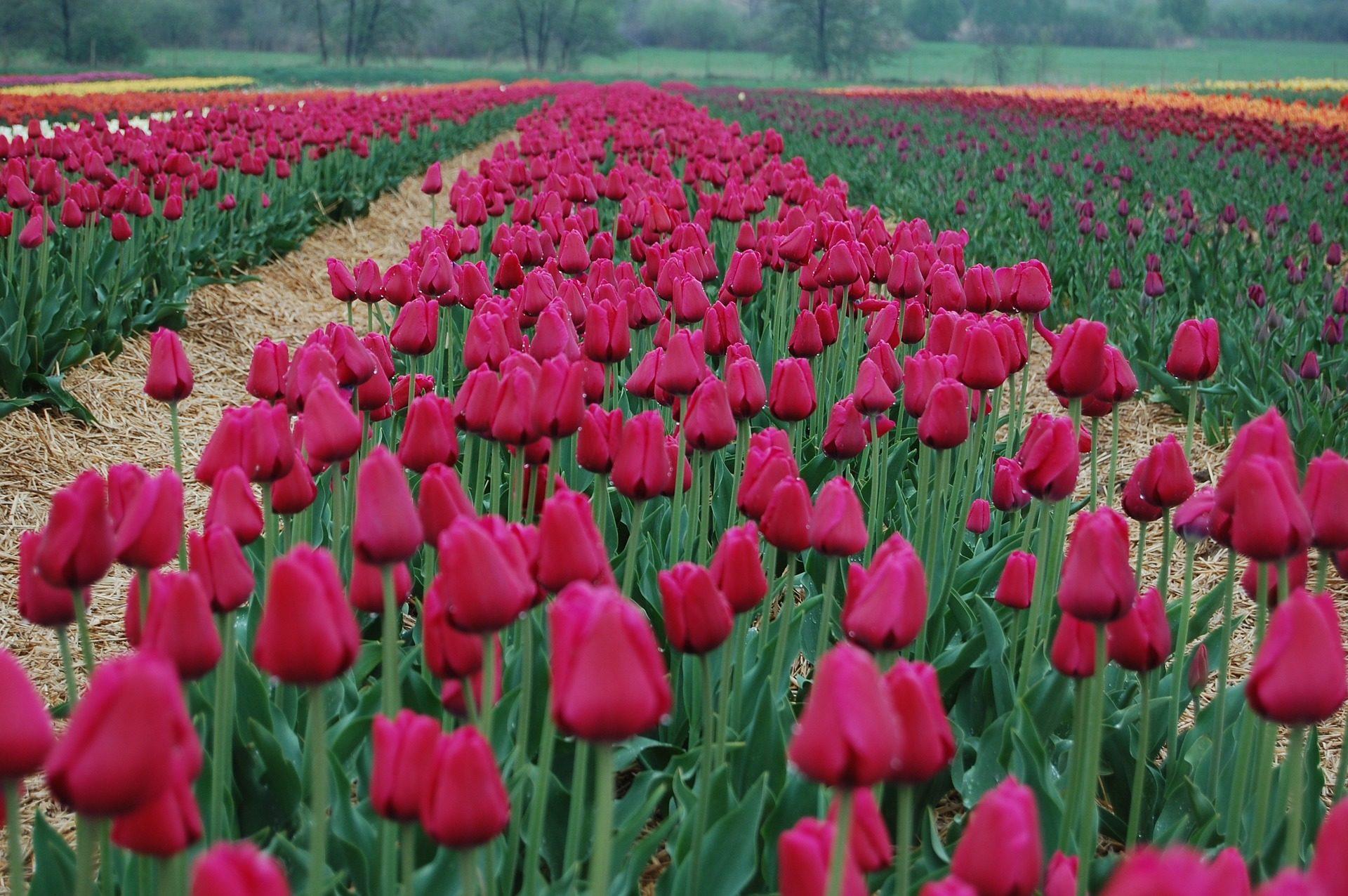 Imagenes De Fondo Flores Para Pantalla Hd 2: Descargar Fondos De Pantalla Fondo De Flores Hd Widescreen